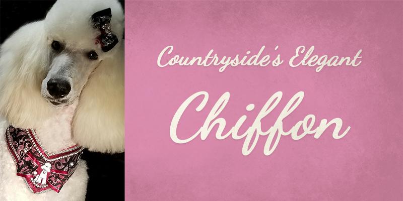 Countryside's Elegant Chiffon titlecard