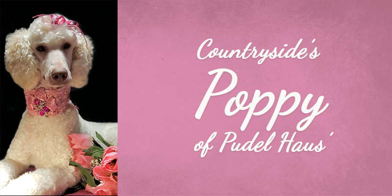 Countryside's Poppy of Pudel Haus' Titlecard