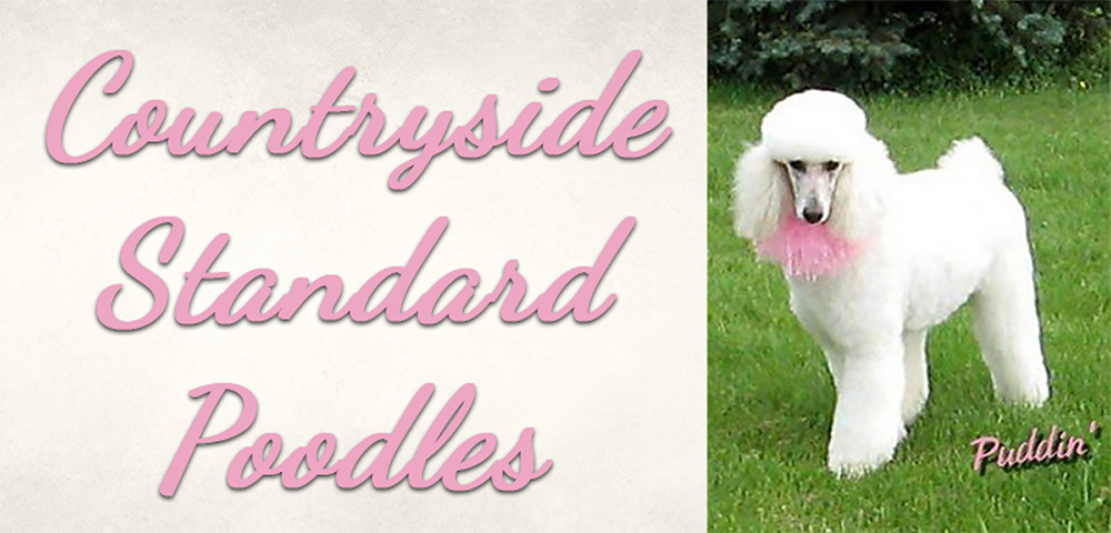 Countryside Standard Poodles Akc Certified Poodles